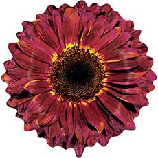 Шар 61 см Фигура Цветок Гербера бордовая